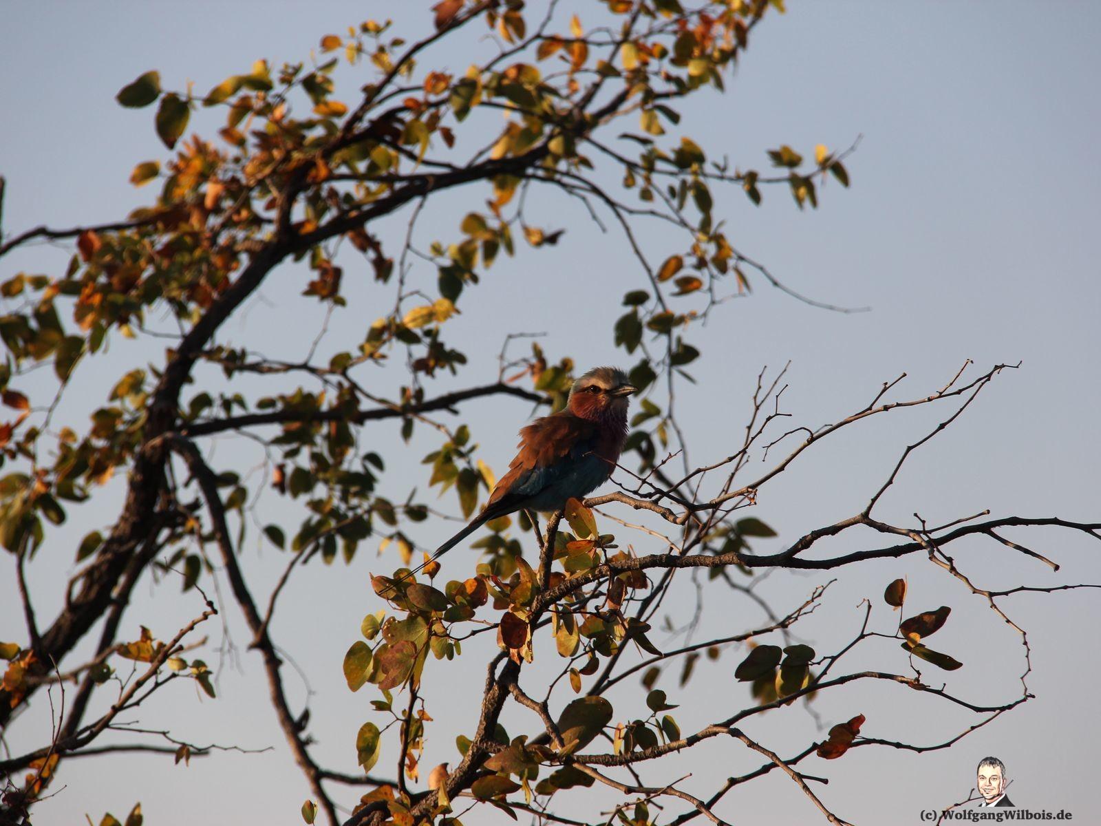 Suedafrika Krueger Nationalpark Vogel