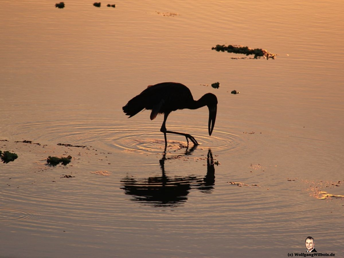 Suedafrika Krueger Nationalpark Sonnenuntergang