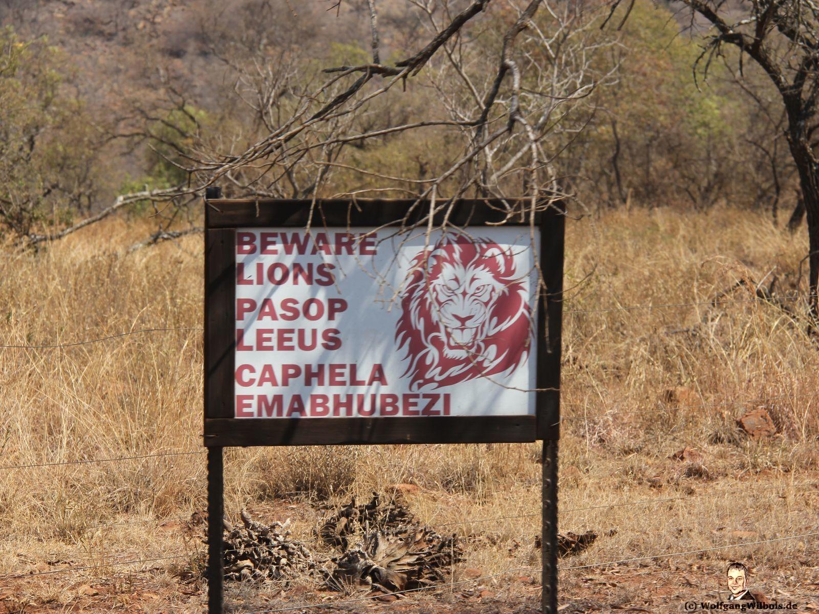 Nkomazi Game Reserve Südafrika Achtung Löwen