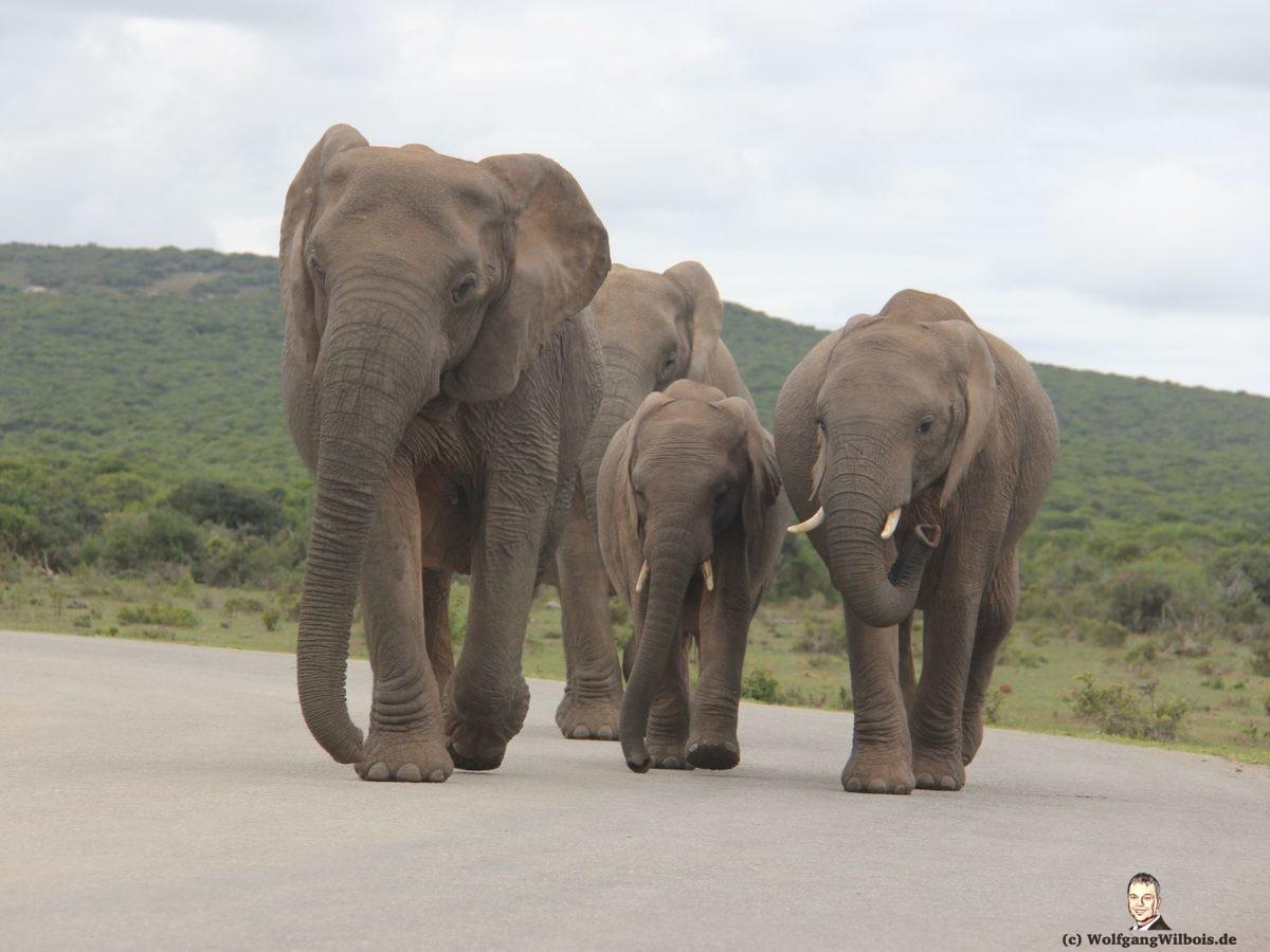 Tag 12 Addo Elefanten Park