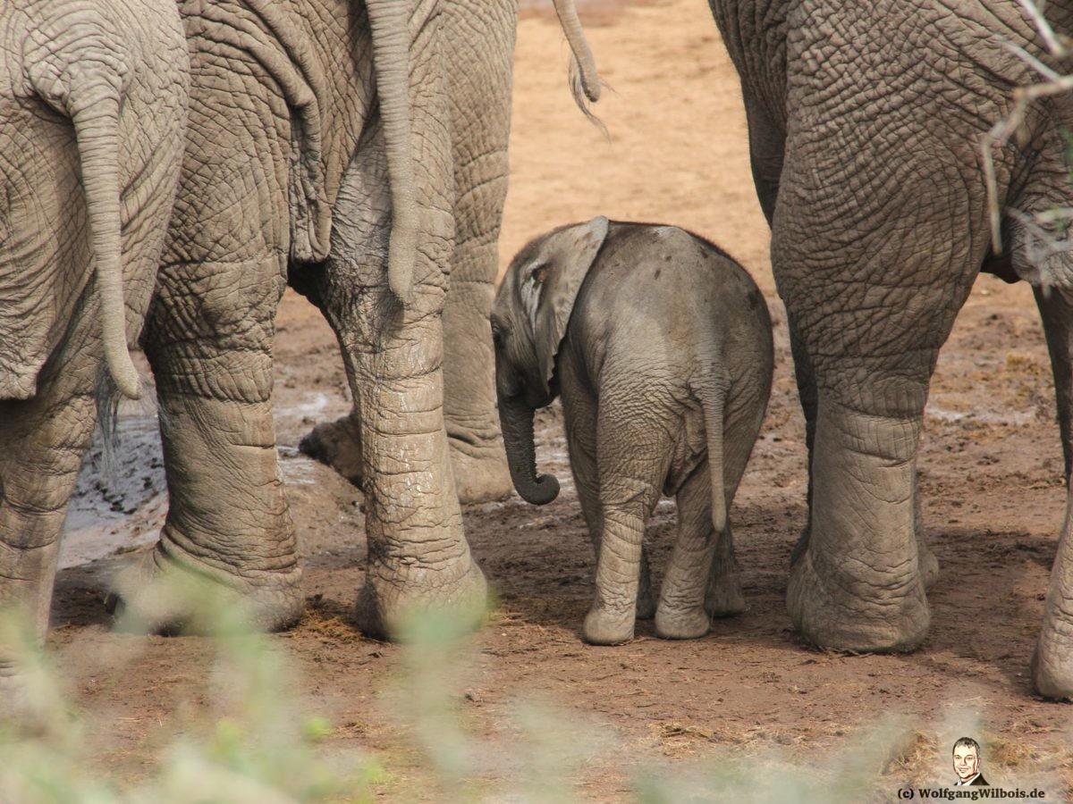 Tag 12 Addo Elefanten Park Babyelefant