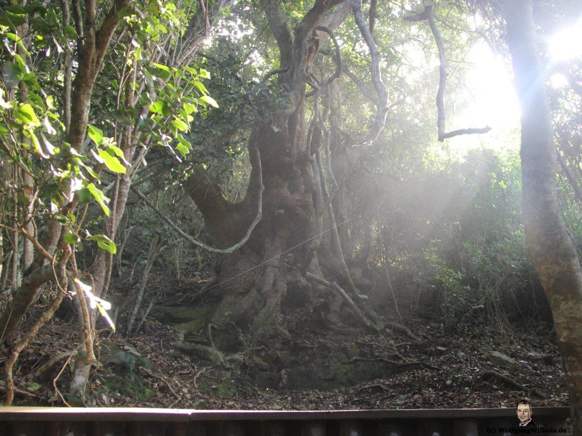 Südafrika Tag 13 Tsitsikamma Nationalpark