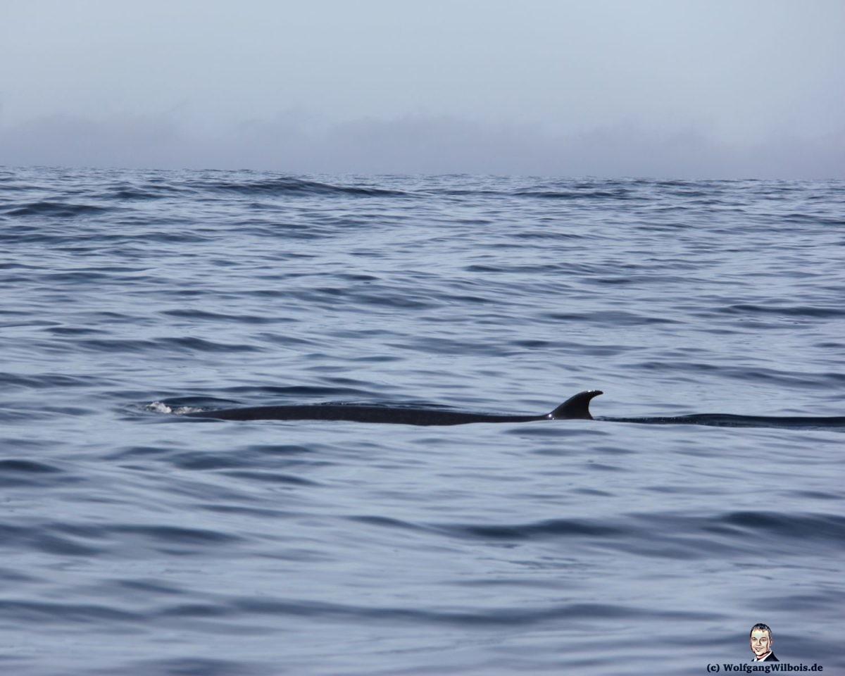 Tag 15 Knyzna Whale Watching