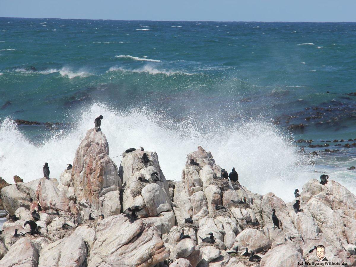Reisebericht Südafrika Tag 17 Kormorane