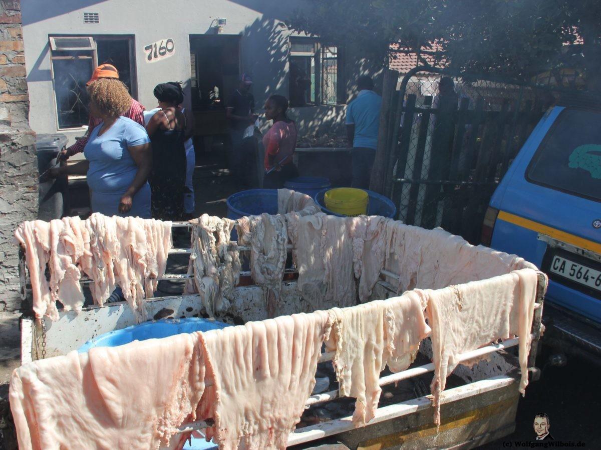 Tag 19 Imizamo Yethu Township Rindermagen
