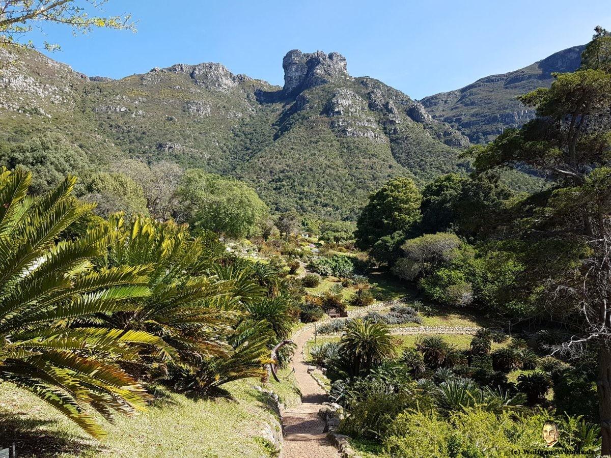 Tag 19 Kirstenbosch Protea