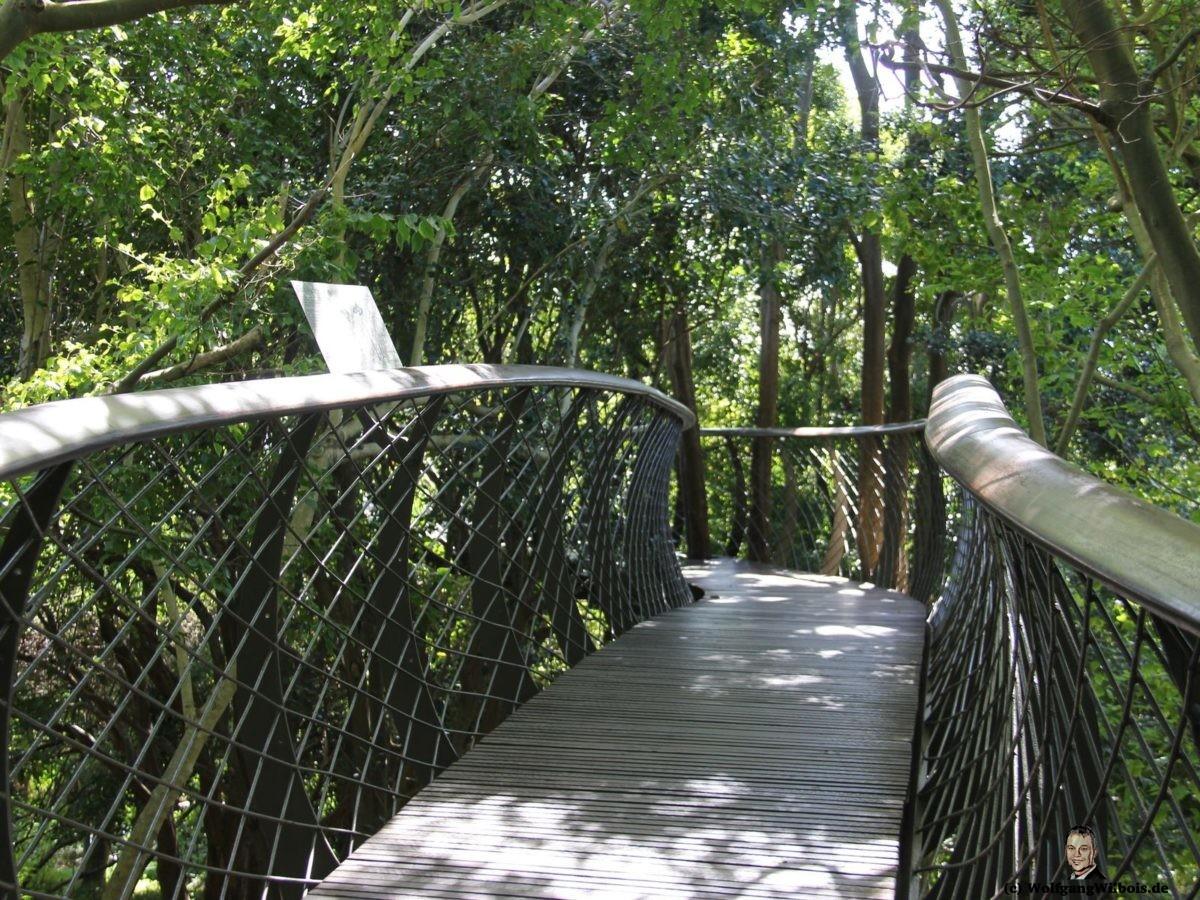 Tag 19 Kirstenbosch Baumwipfelpfad