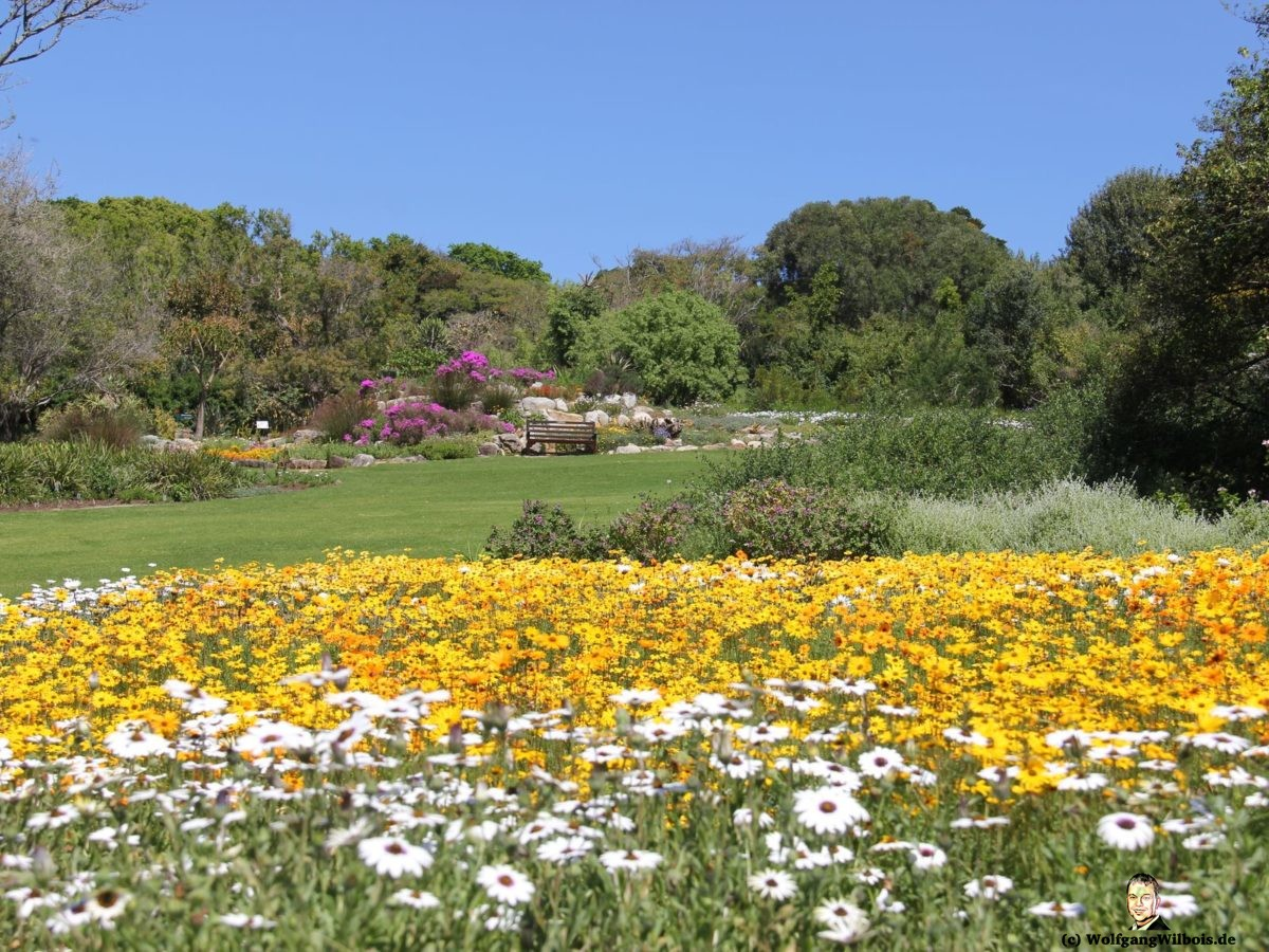 Tag 19 Kirstenbosch
