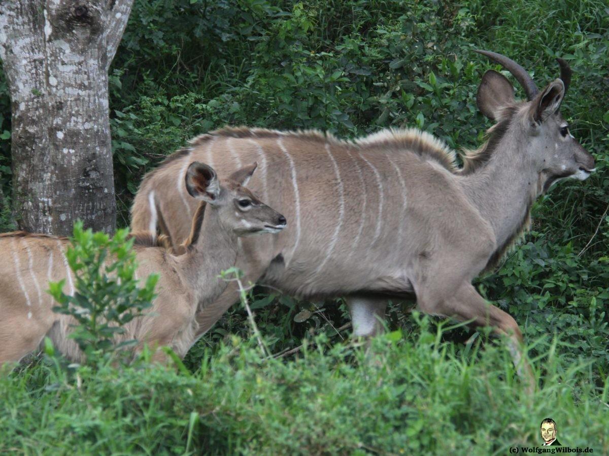 iSimangaliso Wetland Park Tiere