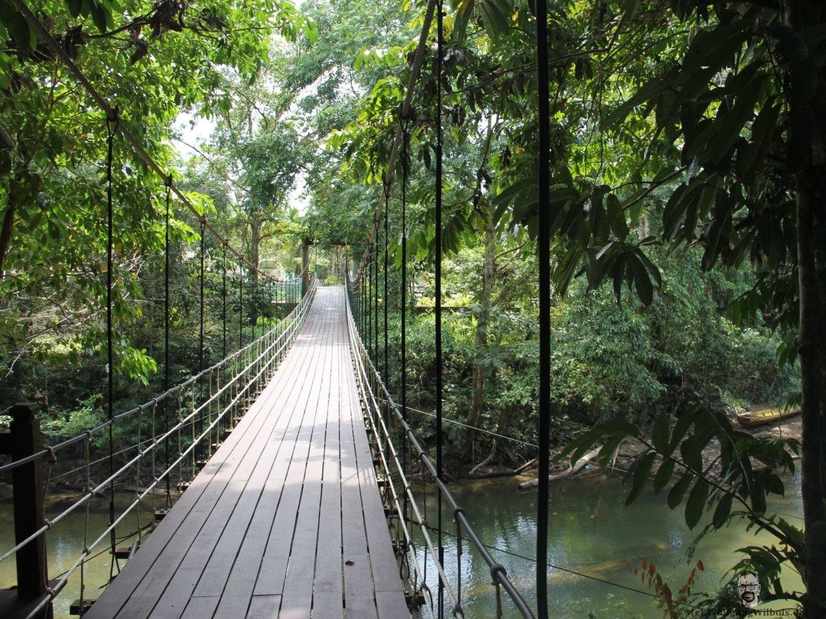 Borneo Tag 8 Mulu Nationalpark Bruecke