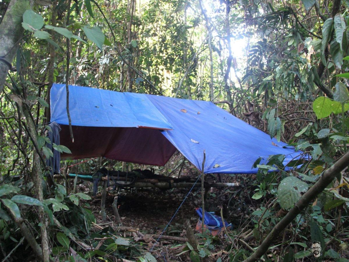Borneo Tag 09 Mulu Nationalpark Dschungel
