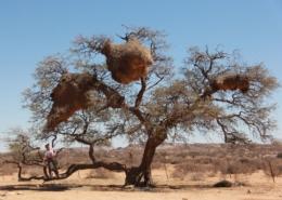 Namibia Tag 02 Desert Camp BAum