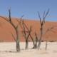 Namibia Tag 03 Deadvlei