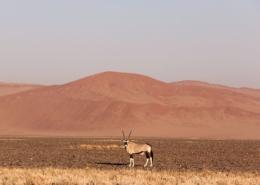 Namibia Tag 03 Deadvlei Onyx