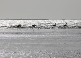 Namibia Tag 04 Flamingos